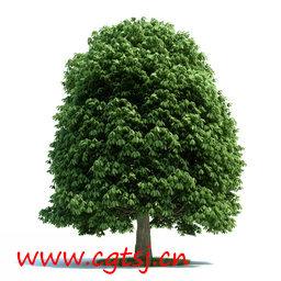 C4D模型md5596_nb8108_w256_h256_x的图片